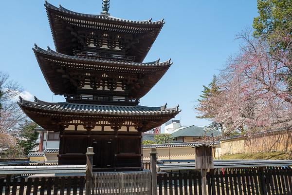 Nara Sakura 2019