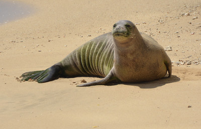 2016 Monk Seal Visits
