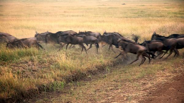 Masai Mara, Renee