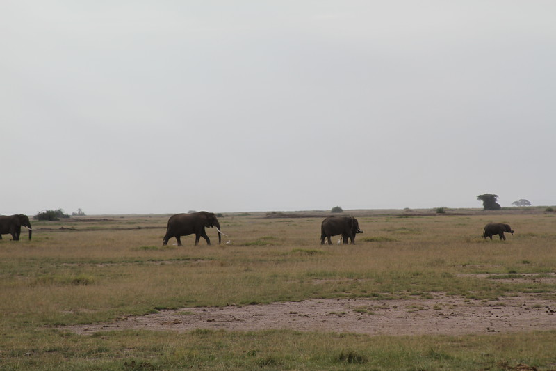 Kenya 2019 #2 293.JPG