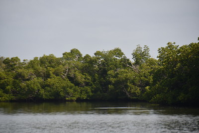 9AM Mangrove Tunnel Kayak Tour - Trevino, Hill, Schulinn & Johnson
