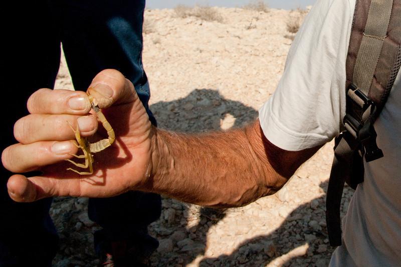 Lifetime Expeditions-Negev 2011-06523.jpg