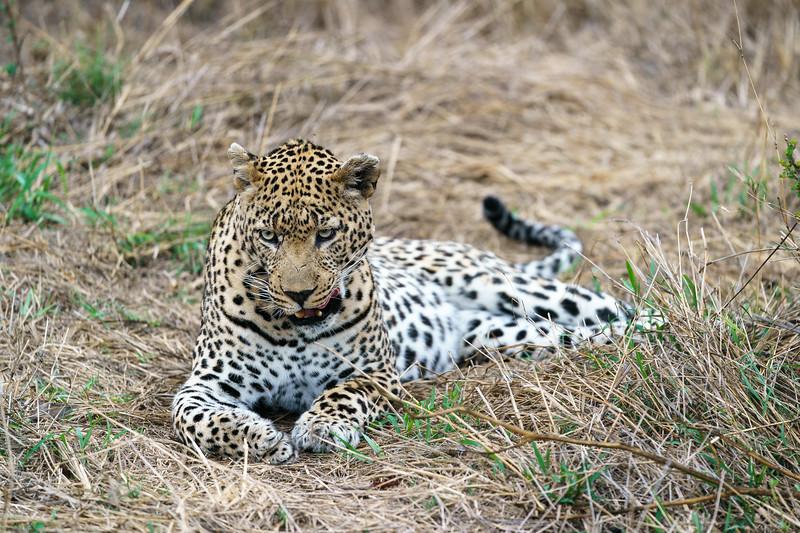 LeopardHills-20171021-0073.jpg