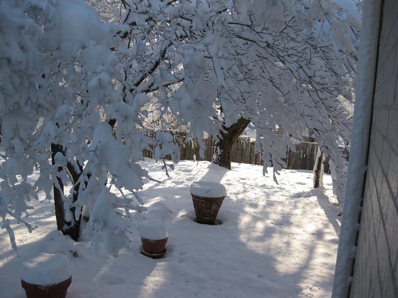 Snow in Jackson_20090301_001.JPG
