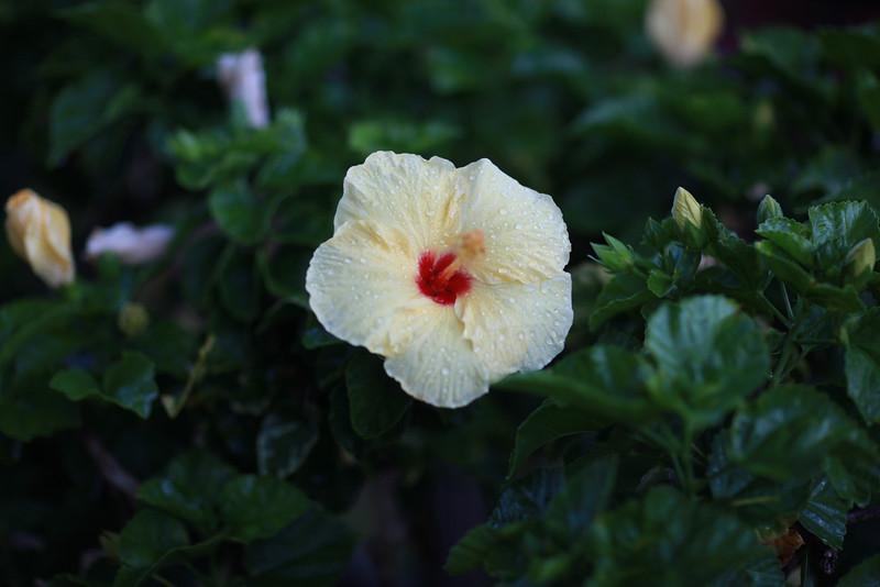 Kauai_D2_AM 122.jpg