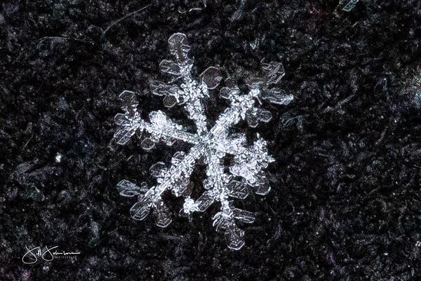 snowflakes-1369.jpg