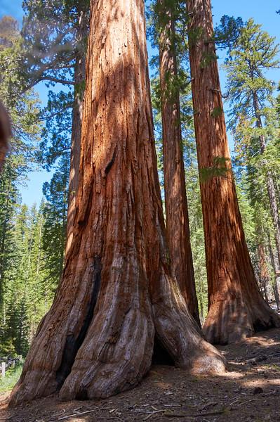 Mariposa Grove of Giant Sequoias