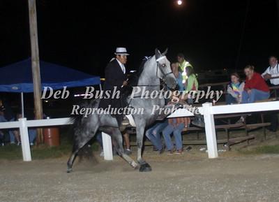 CLASS 43  RACKING HORSE STAKE AD - TC
