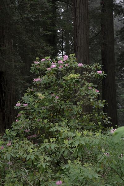 redwoodsFin29-1173.jpg