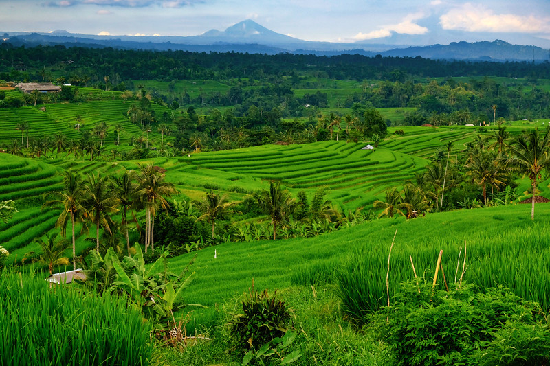jatiluwih-rice-terraces-mountain.jpg