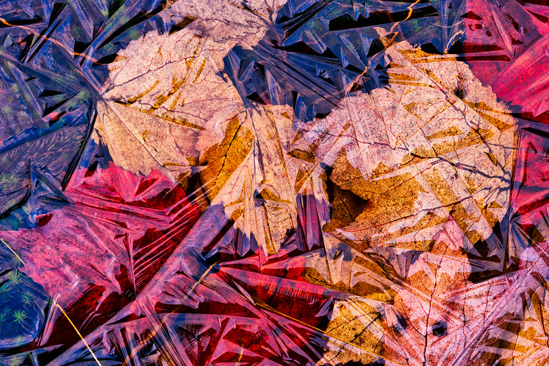 leaves in ice_Nov 7-10_02.jpg