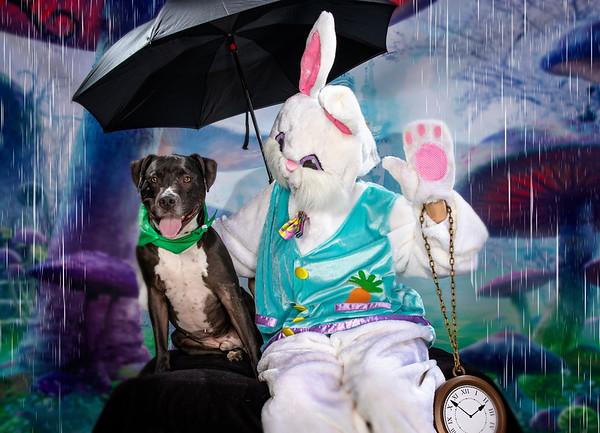 Bunny 2019