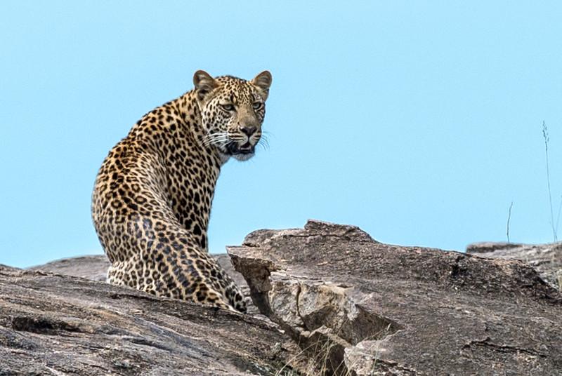 Kenya047.jpg