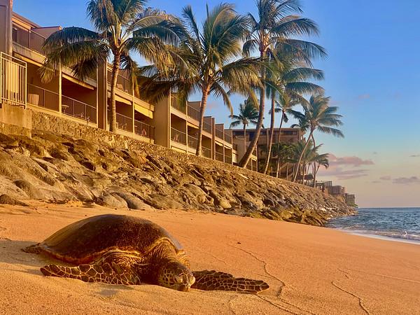Lokelani Condo with Turtles, Beach, Views