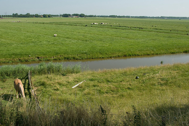 View of the farmland in Beemster Polder, Netherlands
