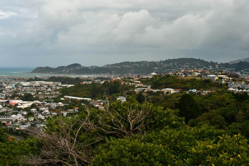 Wellington5762.jpg