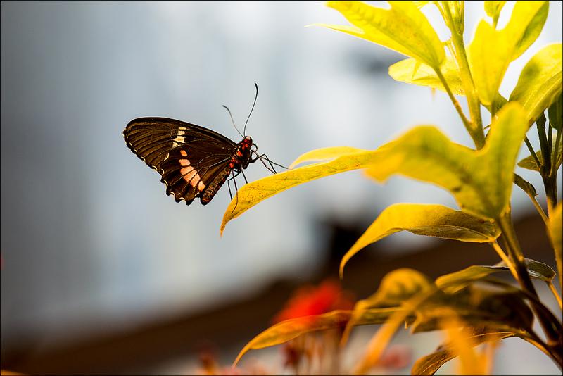 Butterfly 1 NOLA.jpg