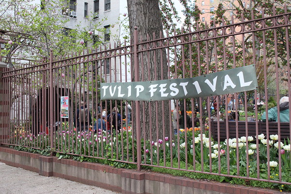 West Side Community Garden Tulip Festival - April 29, 2018