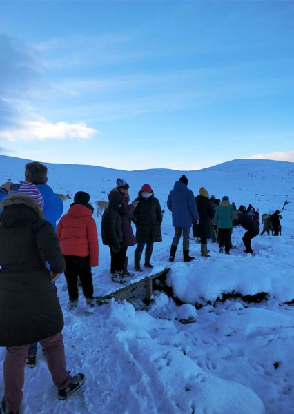 Walking the snow mountains on a Cairngorm reindeer adventure in Scotland.