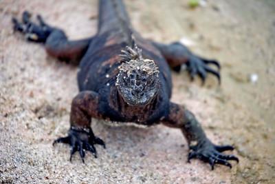 Ecuador: Galapagos