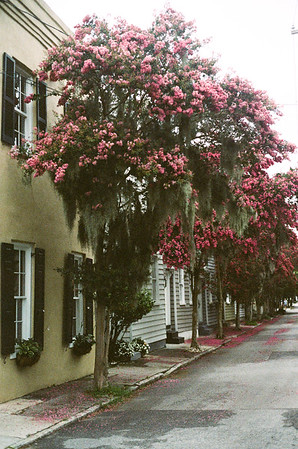 Charleston 35mm Film - June '17