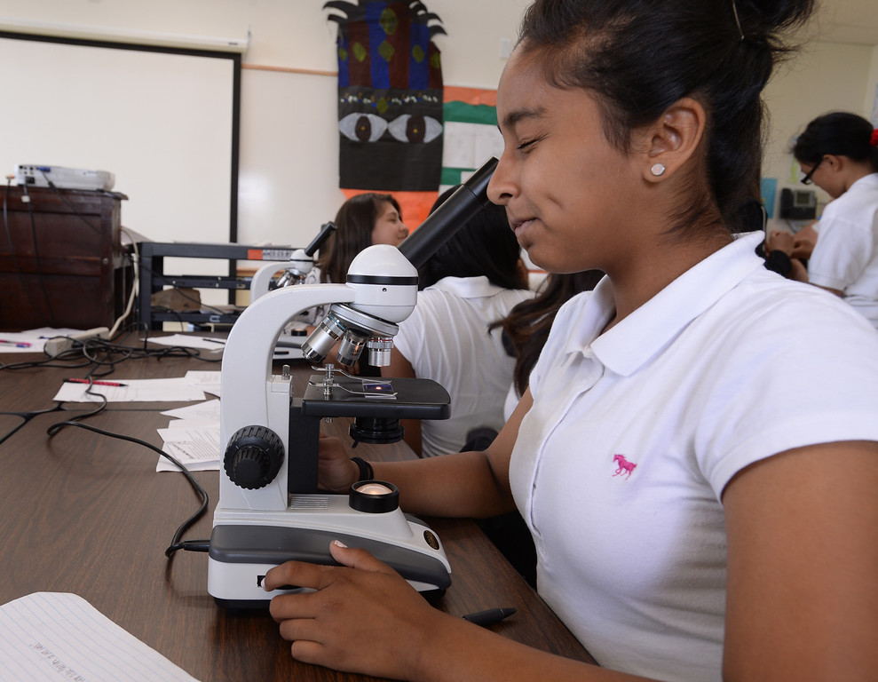 . New Environmental Charter Middle School in Gardena is located on the property of a former church. It serves about 360 students. With a determined expression, Natalie Campos examines her own cheek cells through a microscope. Photos by Brad Graverson 5-22-13