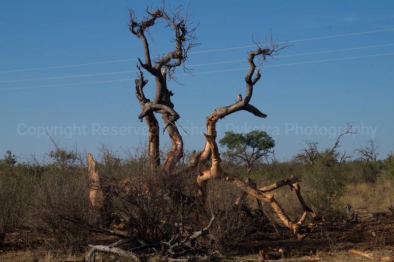 Madikwe-39.jpg
