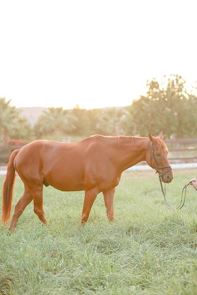Horses-23.jpg