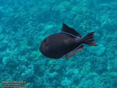 Maui, Hawaii 2020 Snorkeling