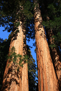 Sequoia and Kings Canyon NP 2008