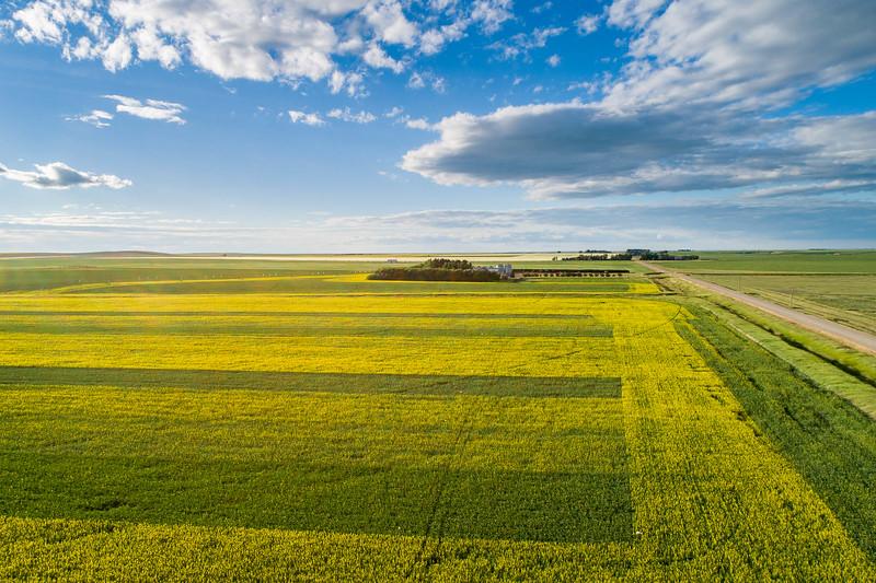 barley 38.jpg