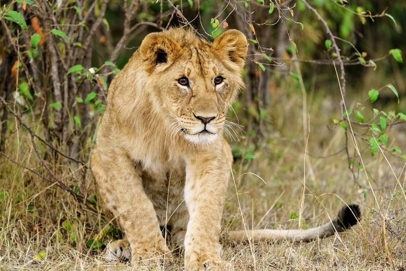 Kenya 2015-10091.jpg