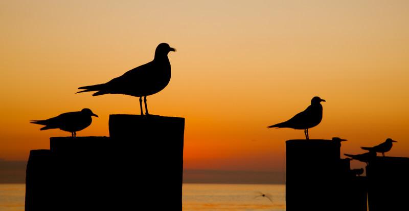 20110104_Naples_Beach_Sunset_0190.jpg