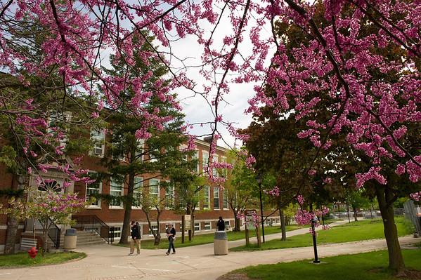 Spring Scenics