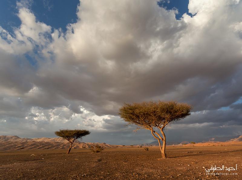 Oman (77).jpg