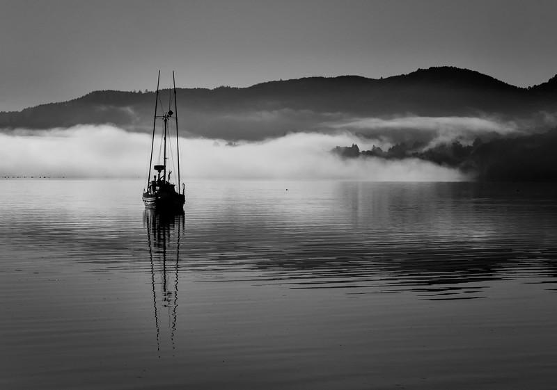 Misty morning on Tomales.jpg