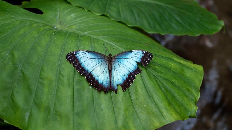Florida-Keys-Key-West-Butterfly-Conservatory-05.jpg