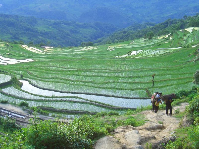 Yuanyang Terraced Rice Fields - Yunnan, China