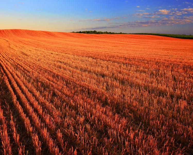Rolling Wheat Field.jpg