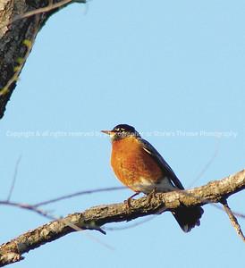 023-bird_robin-warren_co-28apr08-c2-2002