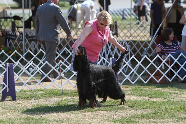 Berks County Kennel Club - September 19, 2010