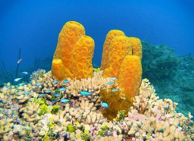 Dive/CSS/Ocho Rios/Jamaica - Apr., 2012