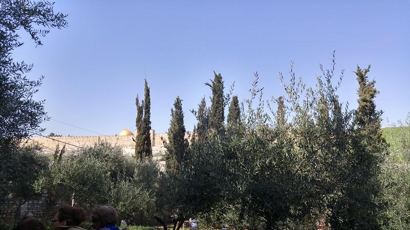8-garden-of-gethsemane