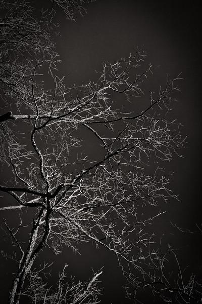 _MG_7088-Edit.jpg