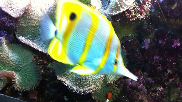 Video: National Aquarium 2010