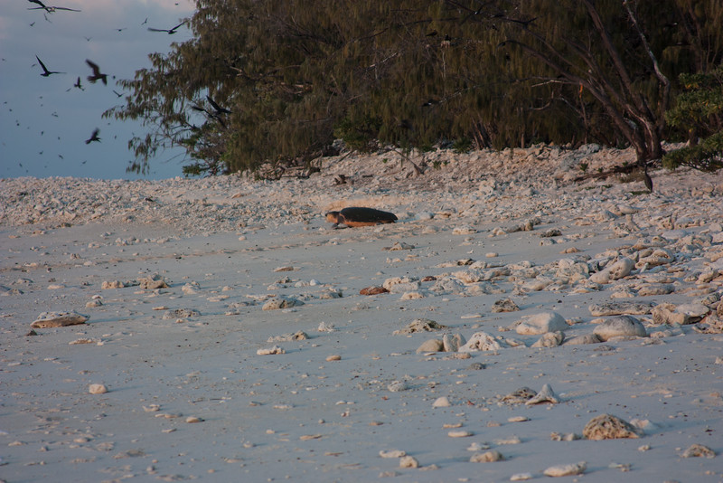 09. Lady Elliott Island-1369.jpg