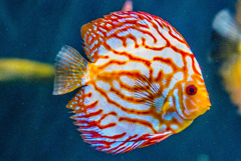 GA Aquarium with Linc, Ali & Abe-136.jpg