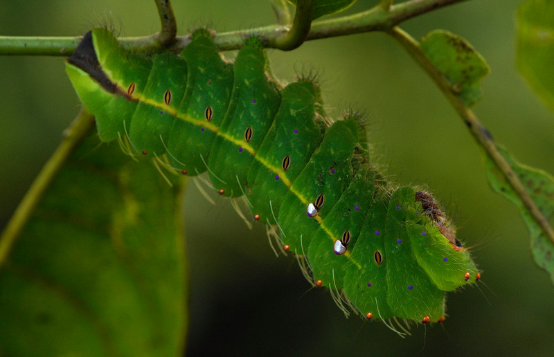 Brightly-coloured-Caterpillar-Goa.jpg