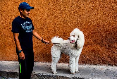 Dog walker, San Miguel de Allende, Mexico