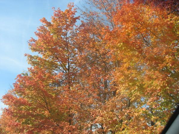 Fall pics 2008 040.jpg